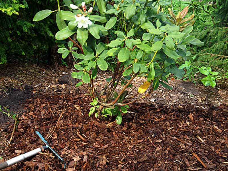 Ground Cover & Bark Mulching