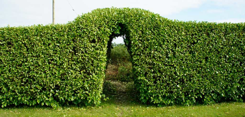 Cut hedge arch